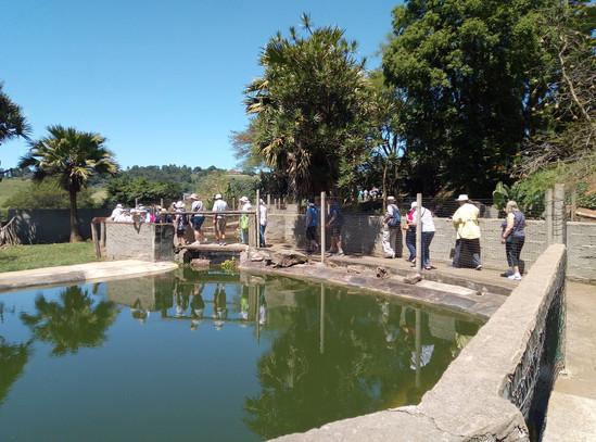 Phezulu Reptile Park