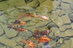 Пруды с живой рыбой