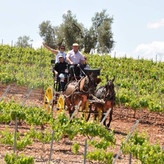 Walk around the wineyards or just enjoy a horseride
