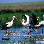 Enjoy routes in one of the most important places for bird watching in Europe