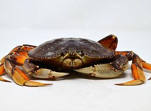 FS_Crab-4.jpg
