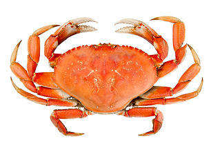 CookedCrab.jpg.jpeg