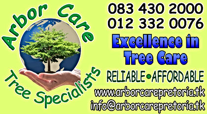 Tree felling, Tree pruning, Tree care, Tree specialists, Pest control, Palm cleaning, Palm felling, Transplant