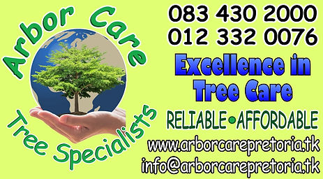 Tree felling, Tree pruning, Tree care, Tree specialists, Palm pruning, Palm cleaning, Palm felling, Tree move, Stump grinding, Pest control