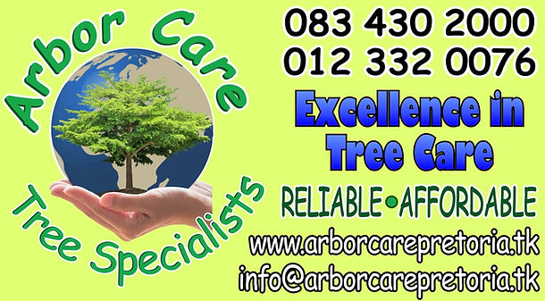 Tree Felling, Palm Felling, Palm cleaning