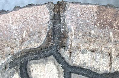 Fusarium in galleries.jpeg