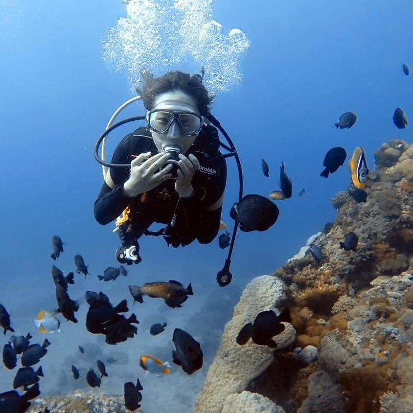 水下三十米能見度 | 綠島潛水 Green Island   Fun Dive 3天2夜含食宿&重裝
