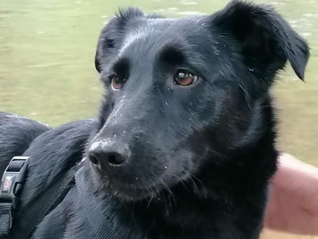 Ida: Ein Angsthund bewirbt sich