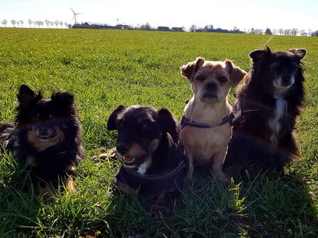 Test: Woran erkennen Sie Tierschutzhund-Sucht?