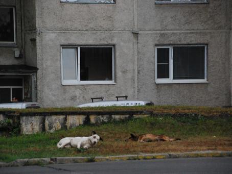 Auslandsvermittlung ist nicht gleich Tierschutz