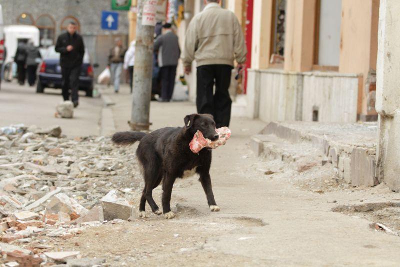 Streuner in Europa, Straßenhunde, Auslandshunde