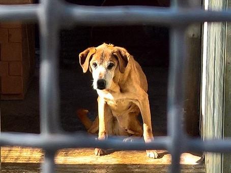 Hunde aus dem Canile sollen gesehen werden