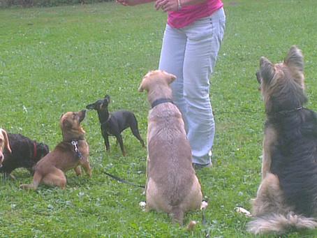 """""""Problemhunde"""" verstehen und führen"""