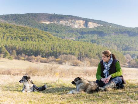 Hunde-Eigenschaften sind Herausforderung und Geschenk