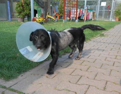 Tierschutzhunde brauchen menschliche Grundhaltungen