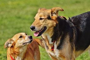 dogs-1615909_1920.jpg
