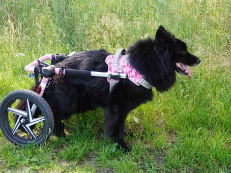 Handicap-Hund: Wo gibt es Hilfe?