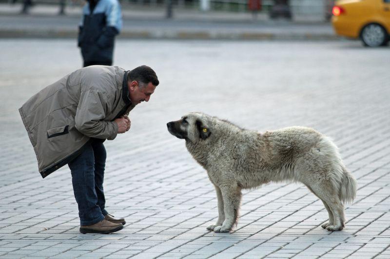 Streuner, Straßenhund, Auslandshund