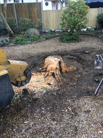 stump grinding 6.JPG