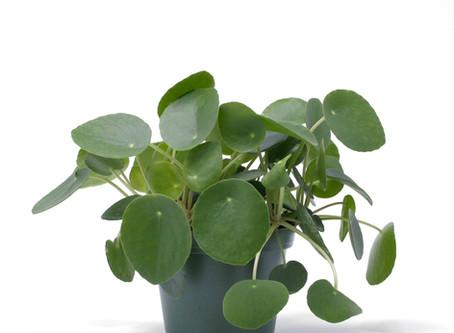 Déco : je veux des plantes !