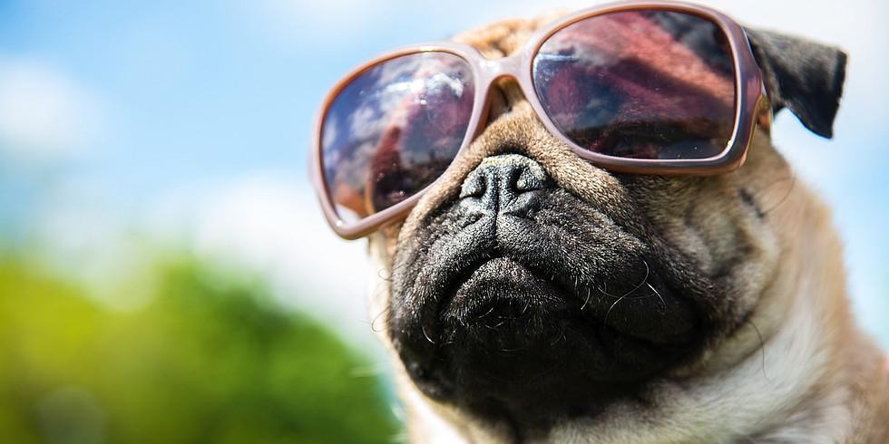 Dog Dayz - Rescheduled for 6/6