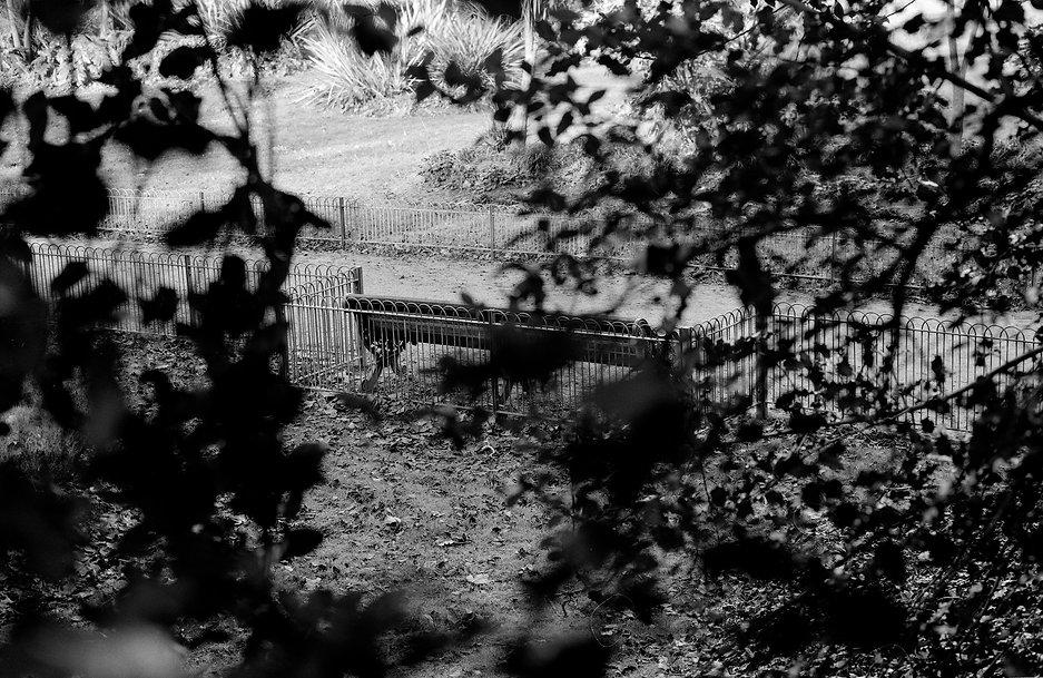 West bench in Sub-tropical garden, Battersea Park.