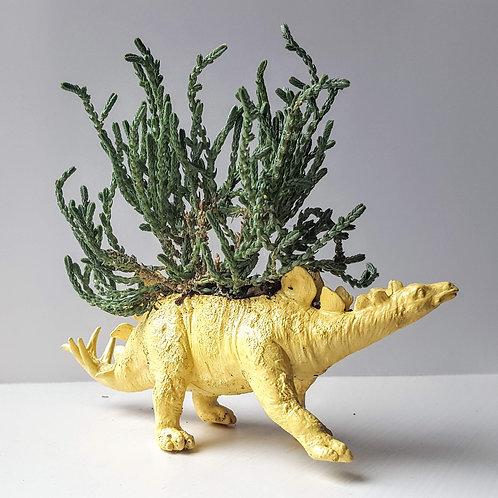 Yellow Stegosaurus