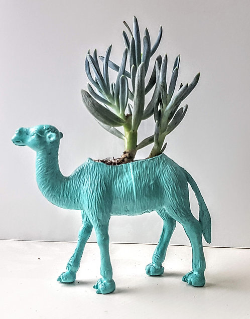 Turquoise Camel