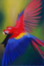 macaw paint