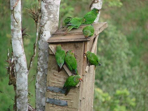 ElOroParakeet , nest box