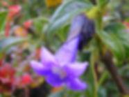 P3150643_edited.jpg