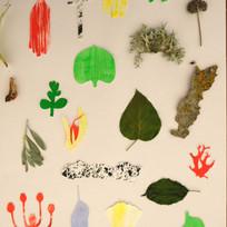 Illustration planche botanique by McFly-illustration