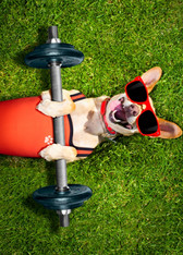 Dog-Exercise%20with%20lifts_edited.jpg