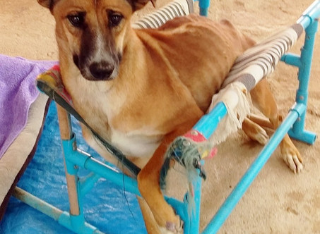 HAS NU DAENG HAD DISTEMPER WHICH HAS LEFT HER BRAIN DAMAGED? EVEN THE VETS AREN'T SURE