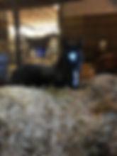18-11-17 bullwinkle 1.jpg