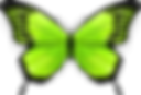 GREEN BUTTERFLY.png
