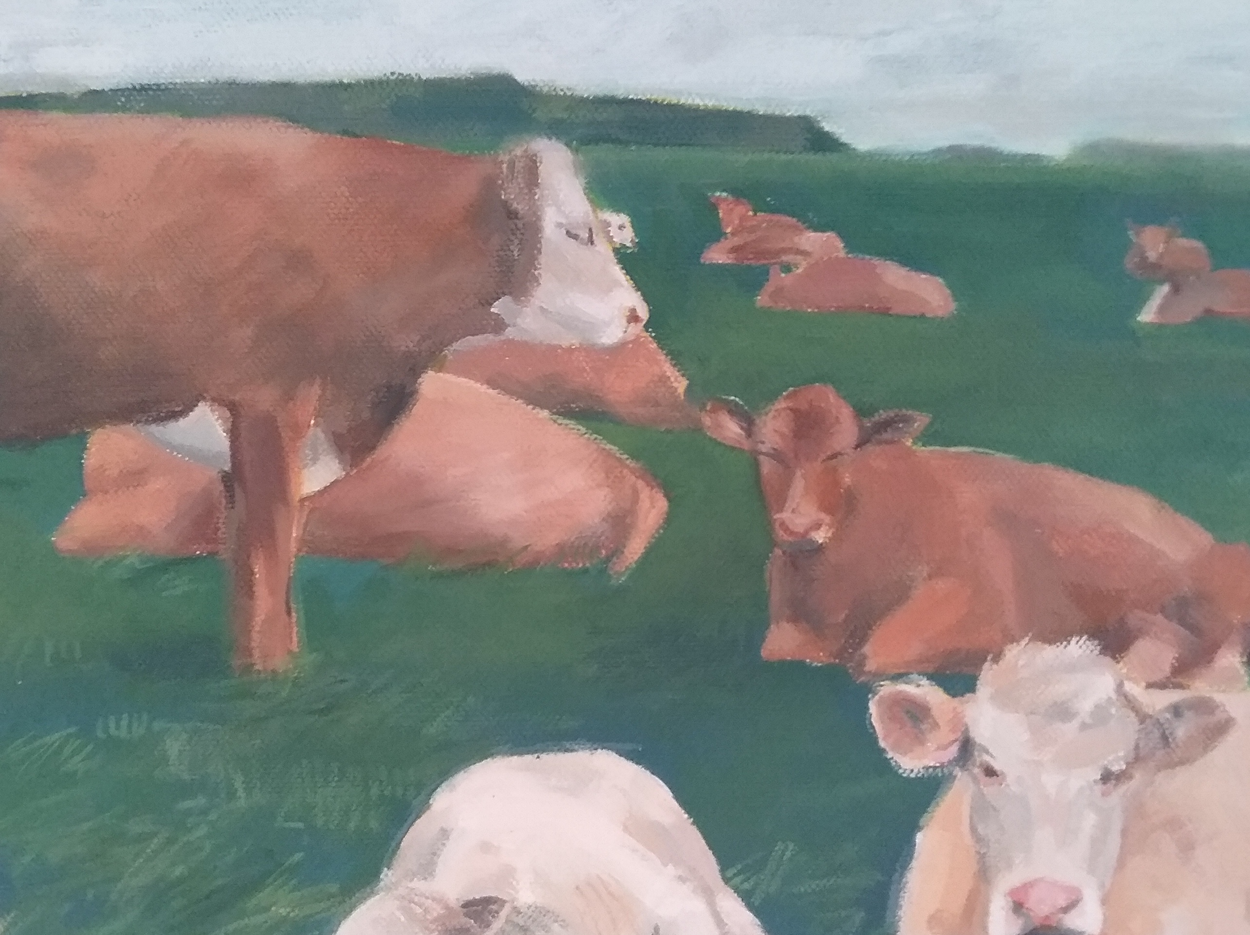 Cows in Repose