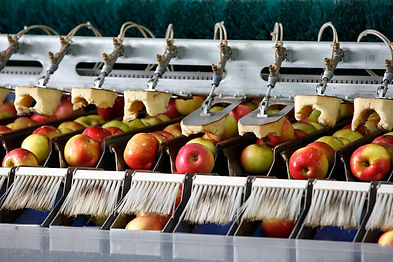 image of an apple sorting machine used in agricultural automation