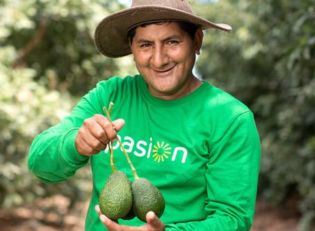 Avocado Exports to USA
