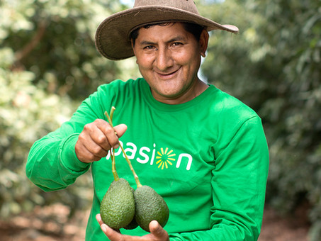 Avocado Exports to USA