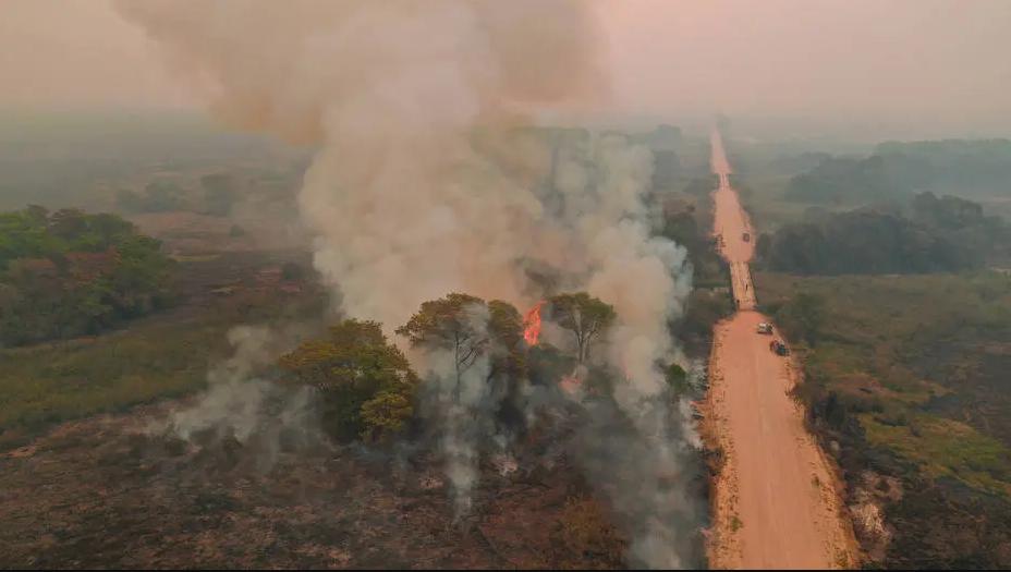 A foto mostra árvores sendo queimadas e um grande volume de fumaça branca subindo no céu. Logo ao lado tem uma estrada de terra.