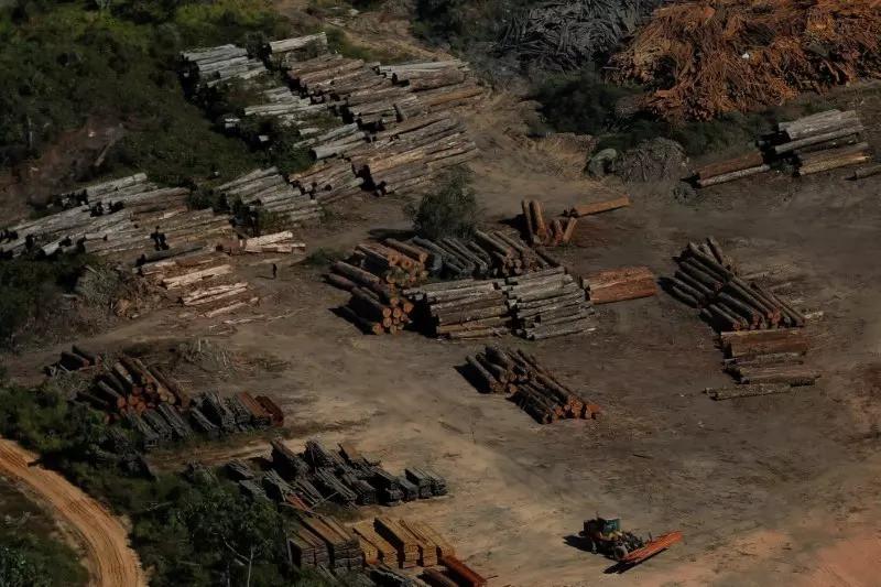 É uma fotografia aérea. Ela mostra toras de madeira desmatada empilhadas no chão.