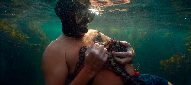 A foto mostra um homem segurando o polvo com as mãos, ele segura rente ao peito. Eles estão debaixo de água. O homem usa máscara, óculos e snorkel de mergulho.