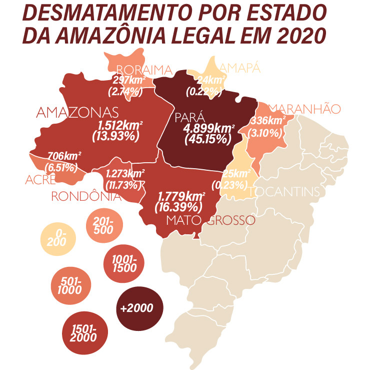 A ilustração mostra o mapa do Brasil. Na parte superior está escrito: Desmatamento por estado da Amazônia Legal em 2020. Os estados estão marcados com cores de tons claros e escuros e seus índices de desmatamento. O Pará, com 4899 km² (45.15%); o Mato Grosso, com 1779 km² (16.39%); o Amazonas, com 1512  km² (13.93%); Rondônia, com 1273 km² (11.73%); Acre, com 706 km² (6.51%); o Maranhão, com 336 km² (3.10%); Roraima, com 297 km² (2.74%); Tocantins, com 25 km² (0.23%); e por último o Amapá, com 24 km² (0.22%).