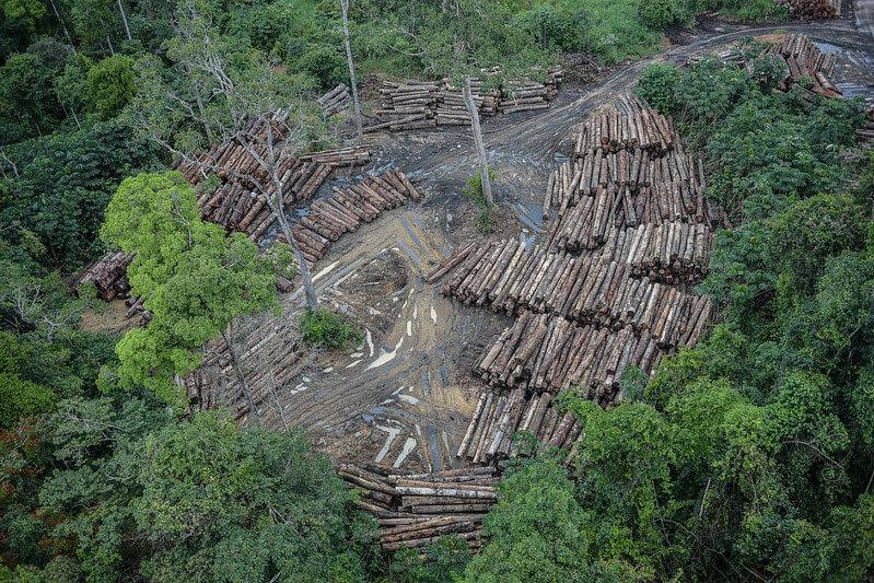 É uma foto aérea. Ela mostra a floresta com um buraco com as árvores cortadas e os troncos empilhados.