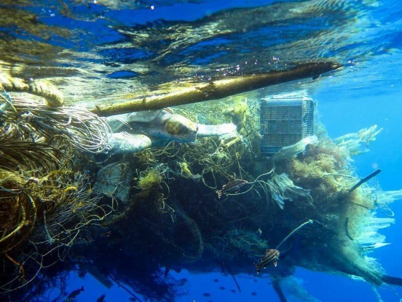 A foto mostra uma tartaruga enrolada em redes de pesca jogadas fora no mar.