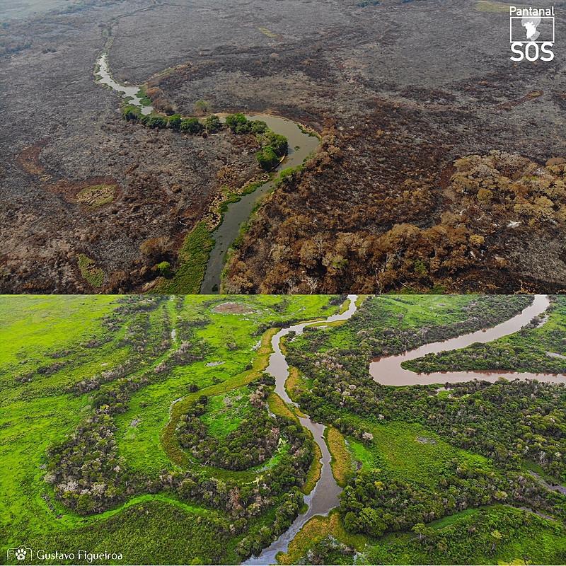 São duas fotos com uma divisão no meio mostrando o antes e depois do Pantanal. Na foto de cima, se vê um rio quase em formato diagonal no centro da foto e ao redor uma vegetação queimada e morta. Na foto abaixo, se vê uma vegetação verde e nova, também tem dois rios entre as plantas.