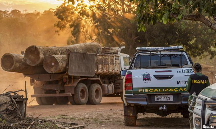 É uma fotografia. Está de dia e o sol está no fundo atrás das árvores. Da esquerda para a direita: um caminhão parado está carregado de toras de madeira e ao lado a camionete de fiscalização e um funcionário do Ibama em pé.