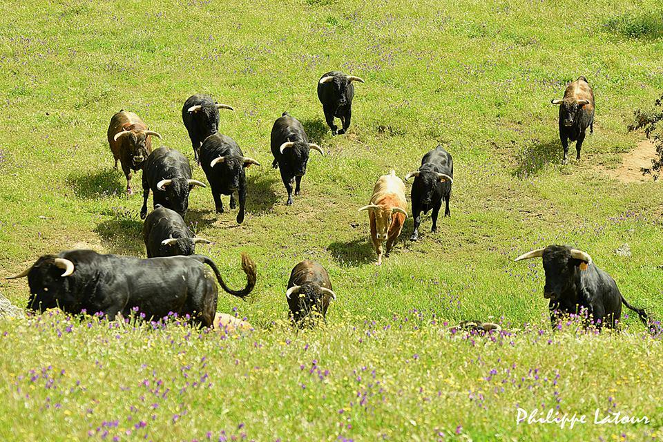 visite de toros