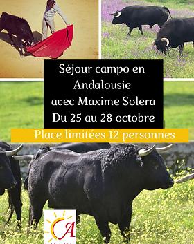 Séjour_Maxime_Solera_octobre_2020.png